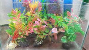 Helecho de java acuarios peces plantas posot class for Peces artificiales para acuarios