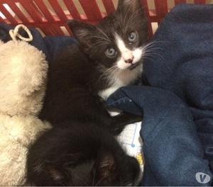 Se da en adopción una gatita