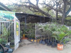 Vivero de plantas y arboles ornamentales cercos2 posot class for Viveros frutales bogota