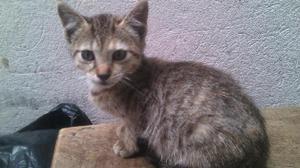 Adopta hermosas gaticas - Ubaté