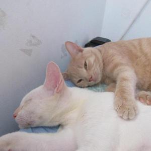 lindos gatitos buscan hogar - Jamundí