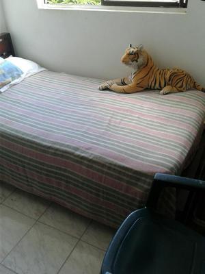 Vendo Remato Tigre