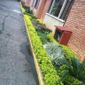 Todo Lo Relacionado con Jardineria - Candelaria