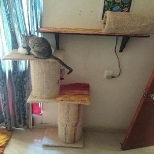 Vendo Gimnasio de Gato - Envigado