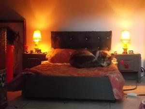 Cama Gato,Perro. mediano