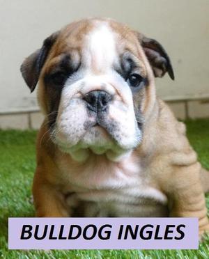 cachorros a muy buen precio envios desde CALI!!!!