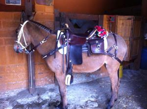 Se vende hermosa mula para vaqueria o carga posot class for Sillas para vaqueria