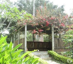 Vivero de plantas y arboles ornamentales cercos posot class for Viveros frutales bogota
