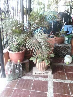 Lote de Planticas para Jardín Y Materas