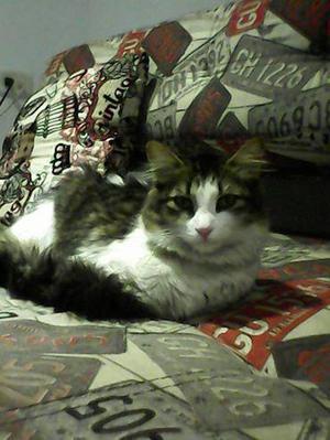 Hermosa gatita busca hogar