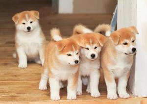 venta de cachorros todo tipo de razas