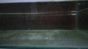 Daphnia Magna Alimento Vivo