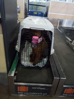 Guacal para perro grande de 20 a 30 kilos