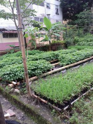 Frutales Y Plantas Ornamentales