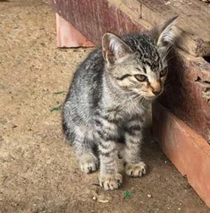 Cali Adopcion Gatitos Bebes 2 Meses