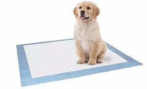 Tapete Entrenador Perros Toalla Entrenadora 60x90cm 10 Unid