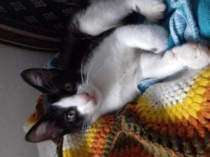 se da en adopcion gatita de 4 meses