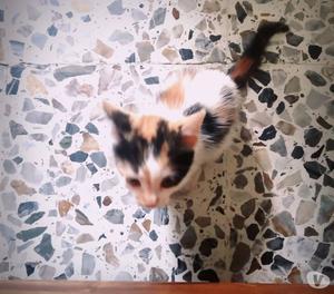 adopta una gatita