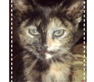 Doy en adopción gatita de 2 meses