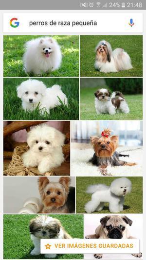 Adopto Cualquier Perro de Raza Pequeña