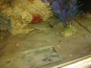 Peces ornamentales villavicencio posot class for Acuariofilia peces ornamentales