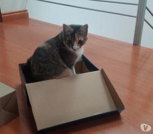 Doy en adopción a una linda y tierna gatica!