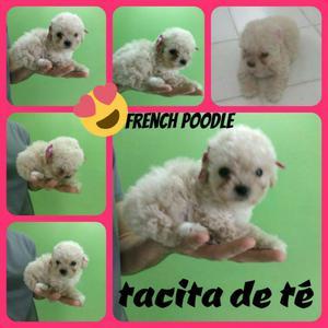 French Poodle Tacita de Te Envios Nacio