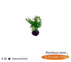 Hermosos troncos curados para acuarios posot class for Plantas decorativas artificiales bogota