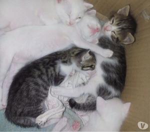 Gatitos buscan hogar