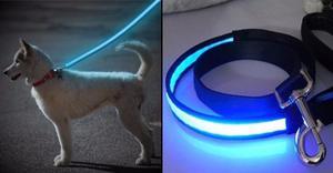 12 Correas Para Collar Perro Mascota Con Luz Led Mck Ne
