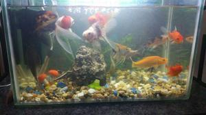 Peces ornamentales amazonicos2 posot class for Criadero de peces ornamentales