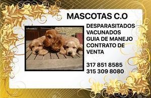 SPANIEL COCKER! ENVIOS NACIONALES,MASCOTAS C.O