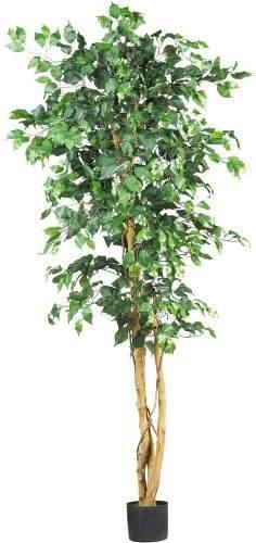 Casi Natural  Ficus Silk Tree, 6-pies, Verde