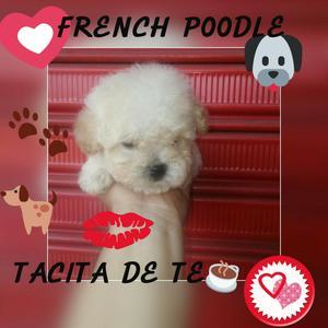 French Poodle Tacita de Te Envios Nacion