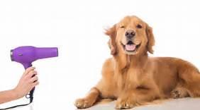 Ofresco servicios de peluqueria canina. solicito empleo o