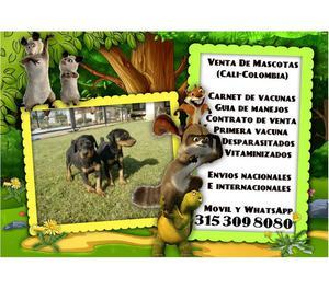 Venta de excelentes cachorros doberman en venta garantizados