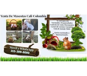 Venta de tiernos cachorros chihuahua finos