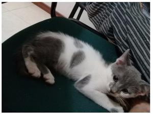 Se da en adopción hermosa gatita.
