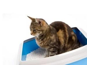 Arenera Para Gato
