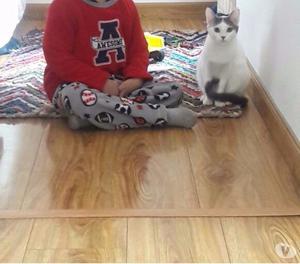 Doy en adopcion hermosa gatita