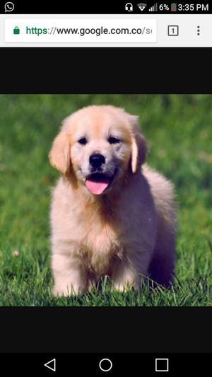 Quiero Adoptar Un Cachorro