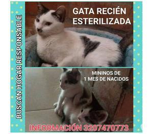 ★ GRATIS PALMIRA, Adopta 1 Gata y 2 Bebes, 1 Mes,