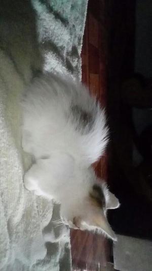 Se Dan en Adopción Gatitos
