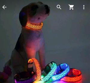 Collares Navideños para Perros