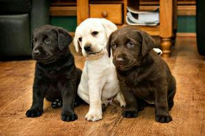 Busco Perro Cachorro para Adoptar