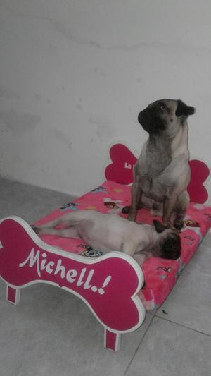 Cachorros Pug Chino Patas Corta Riginal