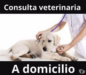 Consulta veterinario a domicilio Bogotá