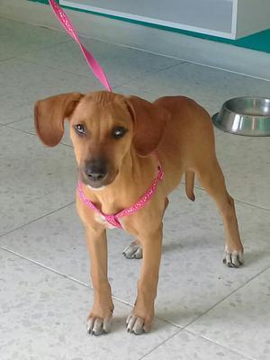 Cali Adopcion Cachorra. de 4 O 5 Meses.