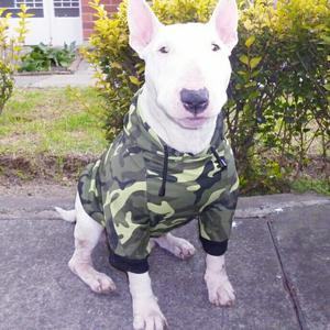 Ropa para mascotas a buen precio chaquetas en todas las