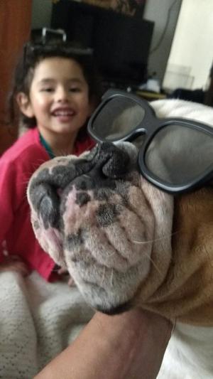 Busco Novia para Mi Perro